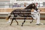 Asterhof's Magic Gold-14