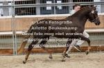 Asterhof's Magic Gold-22