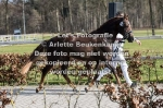 Asterhof's Magic Gold-5